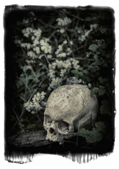 BAROQUE EQUINOX III (Skull)(2012)